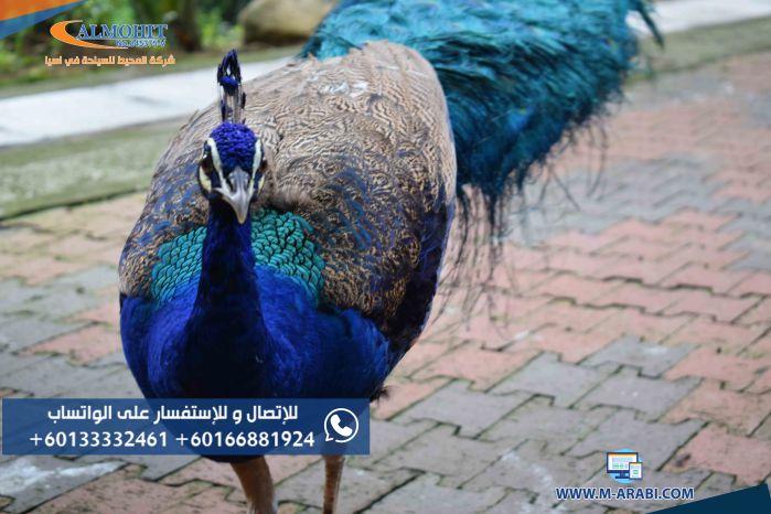 حديقة الطيور كوالالمبور TAMAN BURUNG